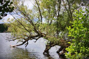 przyroda i widoki jezioro sławskie Lubiatów